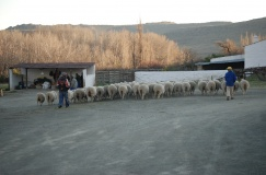 KAROO and AGRO Tours