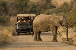 Pilanesberg wildlife Game Reserve One Day Safari